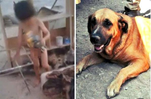 كلبة ترضع طفلا، تشيلي 597x392.bmp